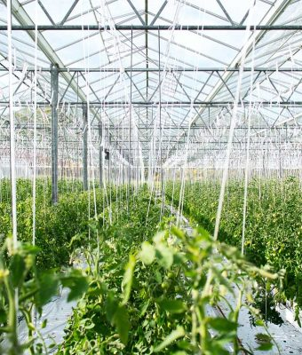 horticulture-greenhouse-video-thumbnail